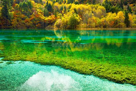 Five Flower Lake in autumnal environment, Jiuzhaigouの写真素材 [FYI02707417]