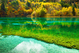 Five Flower Lake in autumnal environment, Jiuzhaigouの写真素材 [FYI02707417]
