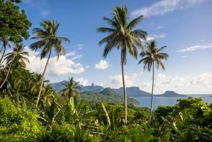 Wooded mountain landscape with palm trees and banana plantsの写真素材 [FYI02707437]