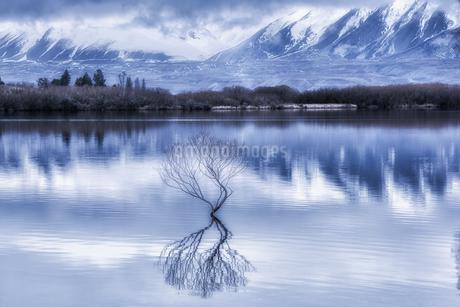 Lake Alexandrina;New Zealandの写真素材 [FYI02707459]