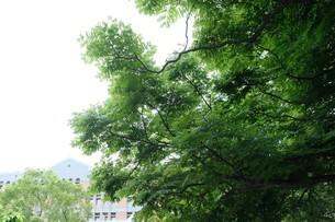National Taiwan University;Taipeiの写真素材 [FYI02707676]