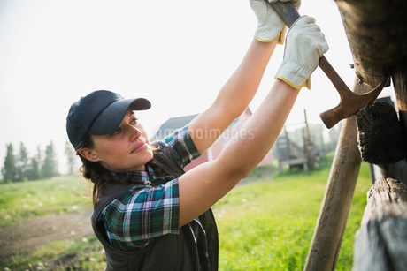 Rancher with hammer replacing fence posts in pastureの写真素材 [FYI02708193]