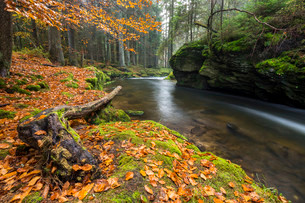 GroBer Regen river, autumn, Bavarian Forest National Parkの写真素材 [FYI02708373]