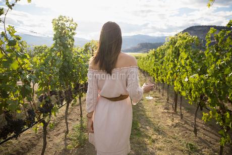 Woman wearing dress wine tasting in sunny vineyardの写真素材 [FYI02708414]