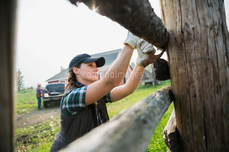Rancher with hammer replacing fence posts in pastureの写真素材 [FYI02708429]