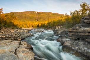 Autumnal Abisko canyon, Abiskojokk river, Abiskojokkの写真素材 [FYI02708522]