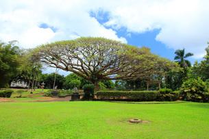 ハワイ島ヒロのリリウオカラニ公園の写真素材 [FYI02708632]