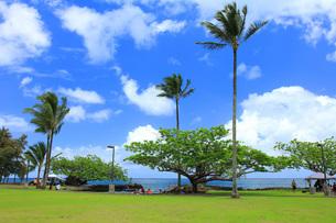 ハワイ島ヒロのココナッツアイランドの写真素材 [FYI02708638]