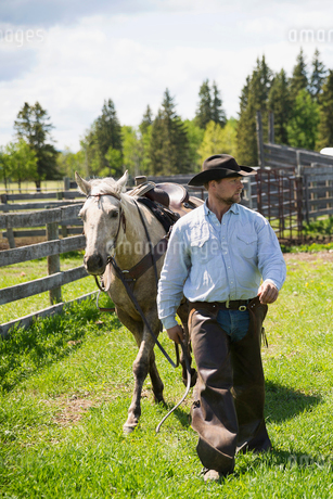 Cattle rancher walking horse on sunny ranchの写真素材 [FYI02708645]