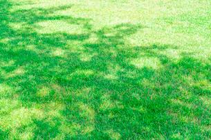 木の影と芝生の写真素材 [FYI02708653]