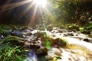 Sunlight through the wood into the creek; Hsinchu; Taiwanの写真素材 [FYI02708720]