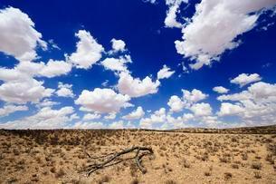 Clouds over dry savannah, Kglagadi Transfrontier Parkの写真素材 [FYI02708768]