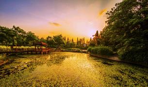 Golden Pondの写真素材 [FYI02708817]