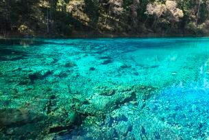 Five Color Pool or Pond, Jiuzhaigou National Park, Sichuanの写真素材 [FYI02708852]