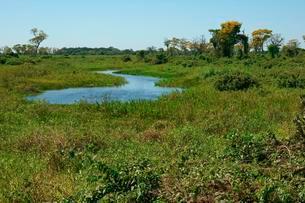 Riverscape Pantanal, Mato Grosso do Sul, Brazil, Southの写真素材 [FYI02708963]