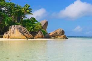Source d'Argent beach, rocks and palm trees, La Digueの写真素材 [FYI02709017]