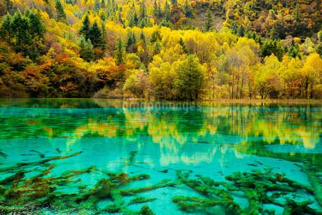 Five Flower Lake in autumnal environment, Jiuzhaigouの写真素材 [FYI02709097]