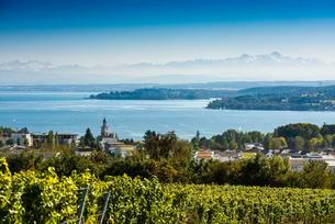 View of Lake Constance, in the back the Swiss Alps withの写真素材 [FYI02709123]