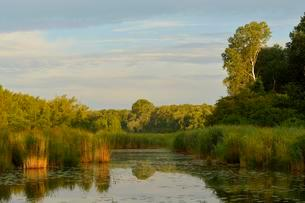 Morning light over a small lake, Gross-Enzersdorf, Lobauの写真素材 [FYI02709124]