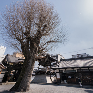 Bukkoji Buddhist Temple;Kyotoの写真素材 [FYI02709125]