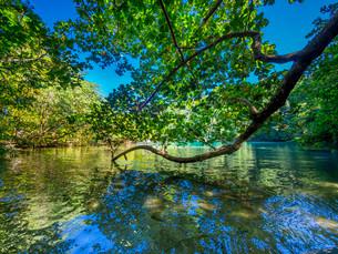 Blue Lagoon, Port Antonio, Portland region, Jamaicaの写真素材 [FYI02709163]