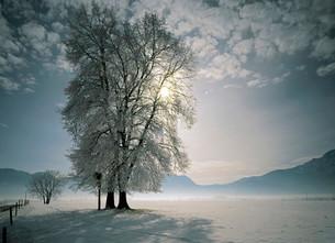 Winter on Lake Kochel, Upper Bavaria, Bavaria, Germanyの写真素材 [FYI02709179]
