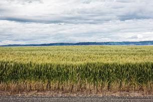 Wheat field areas of eastern Washington, USAの写真素材 [FYI02709396]