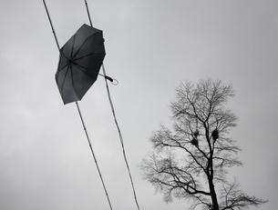 Umbrella flying;Zhejiang Province;Chinaの写真素材 [FYI02709466]