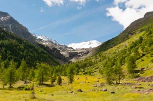Suldental Valley, Val di Solda, with Mt Suldenspitze, Cimaの写真素材 [FYI02709489]