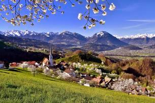 Tonscape of Fraxern with blooming cherry trees and views ofの写真素材 [FYI02709520]