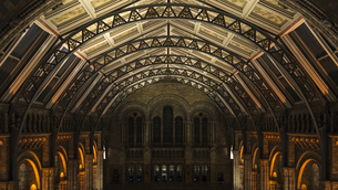 Night in Natural History Museum; London; United Kingdomの写真素材 [FYI02709572]