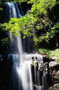Cloud Forest Waterfallの写真素材 [FYI02709639]