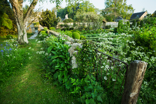 View of garden with fence, flower beds, shrubs and trees, buildings in the background.の写真素材 [FYI02709819]