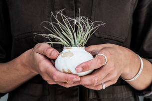 Close up of woman holding air plant in terracotta pots.の写真素材 [FYI02709879]