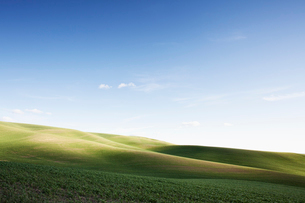 Wheat field areas of eastern Washington, USAの写真素材 [FYI02709993]