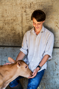 Young man standing in a barn, stroking Guernsey calf.の写真素材 [FYI02710018]