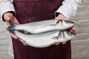 Close up of fishmonger wearing apron holding two fresh fish.の写真素材 [FYI02710188]