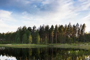 Forest by river in Vasterbotten, Swedenの写真素材 [FYI02710280]