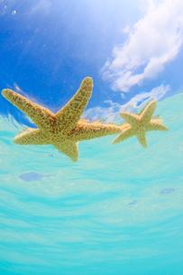 海に浮かんだ海星の写真素材 [FYI02710477]