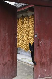 Dog,Chinaの写真素材 [FYI02710532]