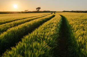 Rural landscape with view across fields of crops near Slapton, Devon at sunset.の写真素材 [FYI02710601]