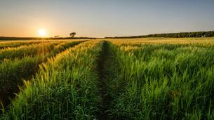 Rural landscape with view across fields of crops near Slapton, Devon at sunset.の写真素材 [FYI02711889]