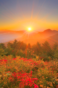 浅間山から昇る朝日と冠着山などの山並みと紅葉の樹林の写真素材 [FYI02711978]