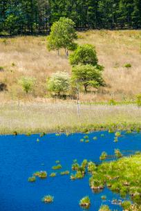 霧ヶ峰高原 春の踊場湿原アシクラの池の写真素材 [FYI02712183]
