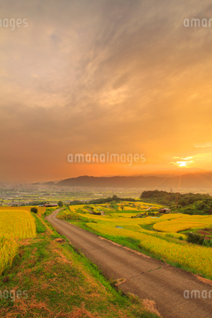 稲穂実る田毎の月の棚田と道路と鏡台山から昇る朝日の写真素材 [FYI02713513]