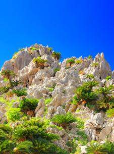 ガーナの岩峰とソテツの写真素材 [FYI02713868]