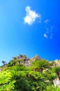 ガーナの岩峰とソテツ林の写真素材 [FYI02714568]