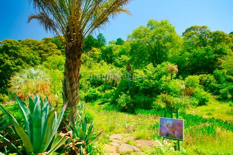 ナツメヤシなどの亜熱帯植物とモネの絵の写真素材 [FYI02716018]