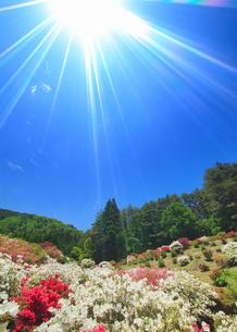 ツツジと女神岳と太陽の写真素材 [FYI02716248]