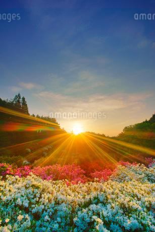 ツツジと朝日の光芒の写真素材 [FYI02716934]